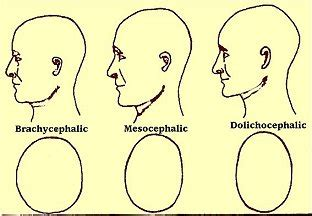 different shapes of penis heads picture 7