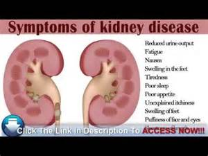 kidney problem symptoms in dachshunds picture 6