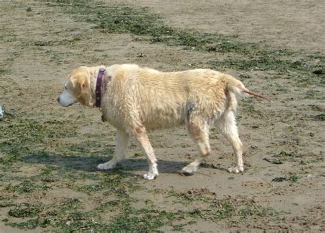 fear in dogs thyroid picture 10
