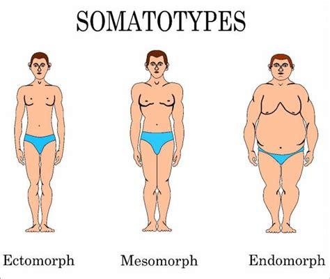somatotype penis type picture 9