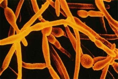 yeast bacteria and men picture 10
