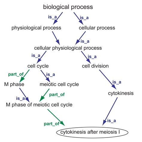 biological process picture 5