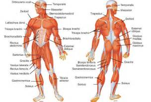 muscle spasm int he body picture 11