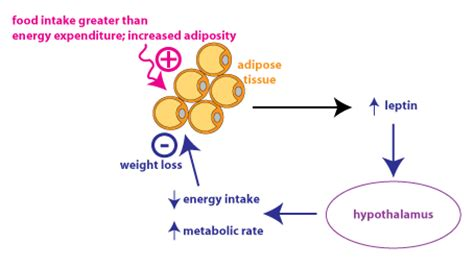 causes for no weight loss picture 3