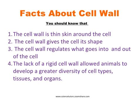skin cell picture 2