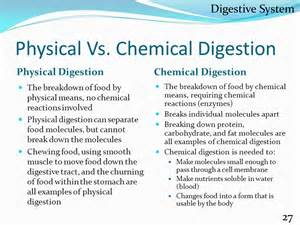 define chemical digestion picture 3