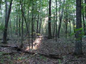 woods picture 9