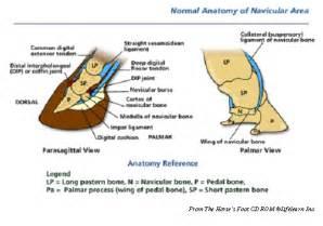navicular disease natural picture 9