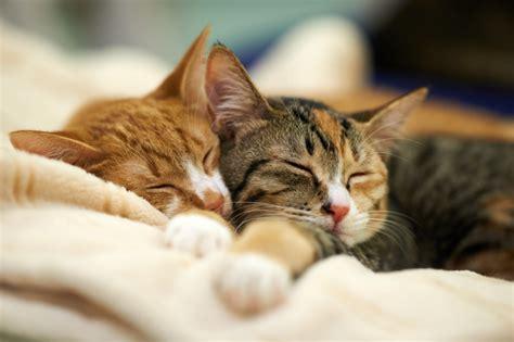 feline picture 3