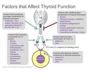 functions of thyroid gland picture 3