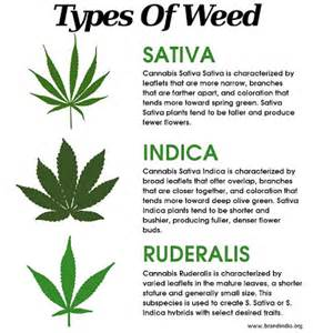 what parts of the maryjane plant do you picture 18