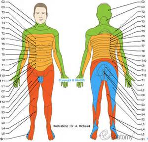 which nerves are affected in herpes zoster picture 13