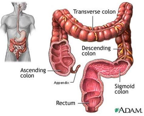 colon cleansing in pictures picture 3
