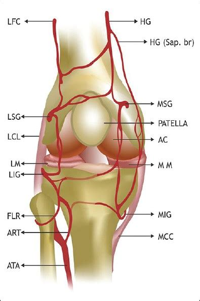 knee joint degeneration picture 11