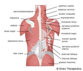 liver back pain picture 9
