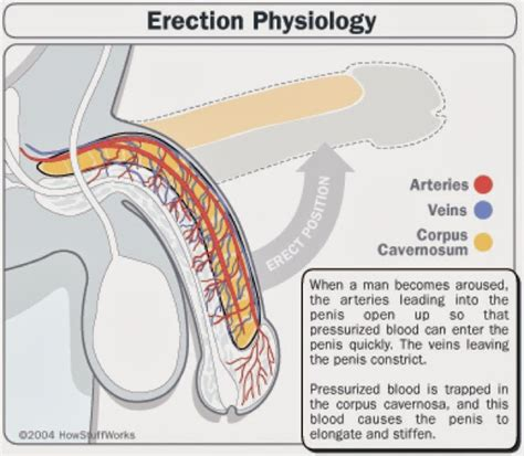 increase blood flow to genitals picture 2