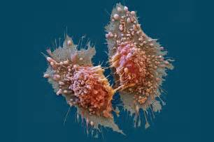 cancer picture 6