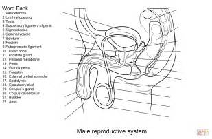 anti reproductive system picture 15