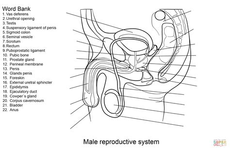anti reproductive system picture 14