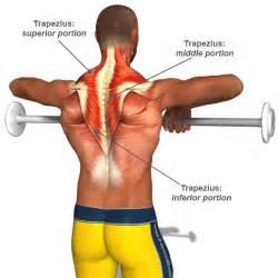 muscle excercises picture 1