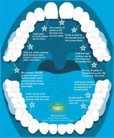 facts on teeth picture 11