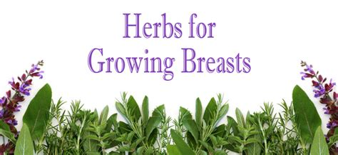 men using herbs to grow breasts picture 5