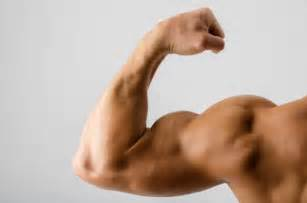 how to build bicep muscle picture 1
