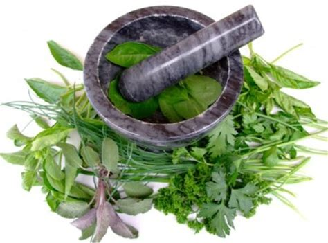 what herbs that can be used as abortion picture 2