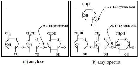 alpha amylase amylose digestion picture 7
