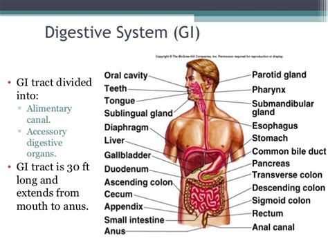 elimination system digestive picture 2