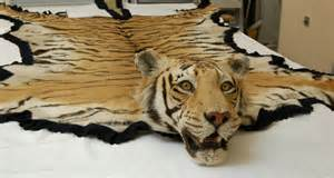 tiger skin rugs picture 2