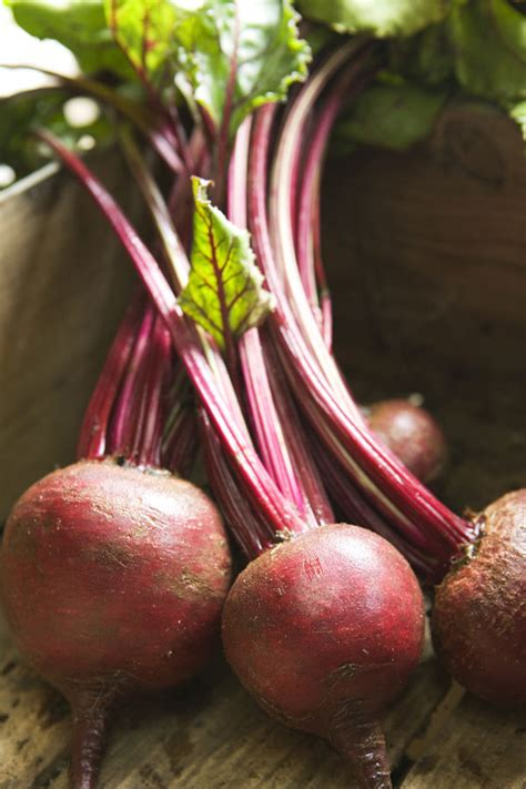 beets for male picture 14