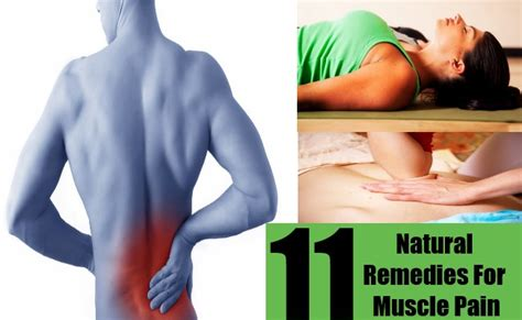 herbal remedies for muscle soreness picture 6