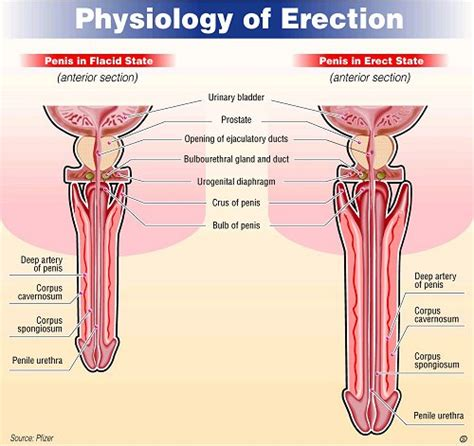 drugs to stop erections picture 7