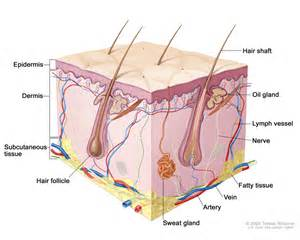 skin cancer invades a nerve picture 2