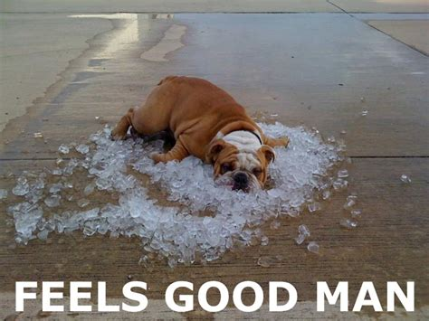 dehydrated and muscle problems in dogs picture 7