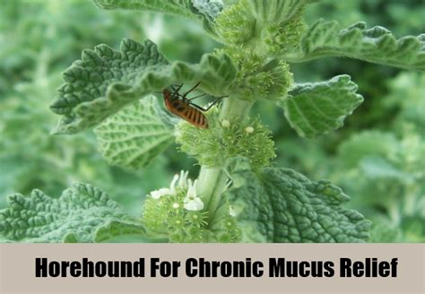 ayurvedic solution to excessive mucus picture 15