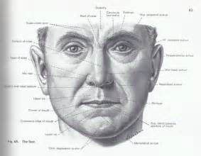 facial anatomy lips picture 1