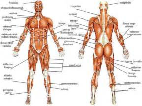 information on how to care for muscle pull picture 9
