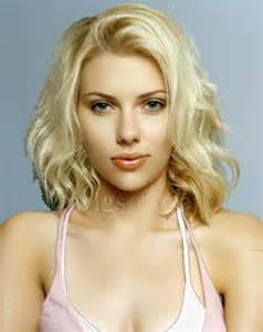 american short hair for sale picture 1