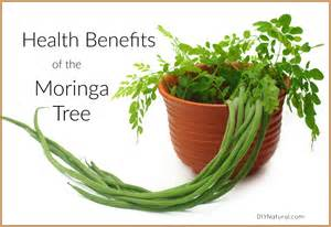 health benefits of sibucao tree picture 5
