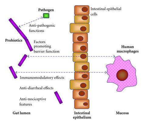 erythrom bladder picture 5