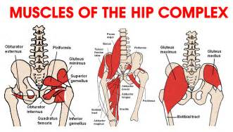 hip flexor muscle pull picture 18
