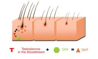 ejaculation testosterone dht picture 10