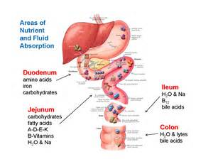 gastrointestinal function picture 6