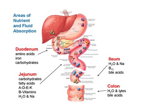 gastrointestinal function picture 2