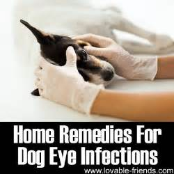 home remedy for yeast infections picture 2