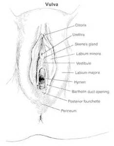 vulva types -cancer -mare -disorder picture 1