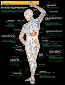 full body fat tissue lymphatic cleanse picture 5