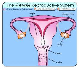 jakol i male reproductive systems picture 11